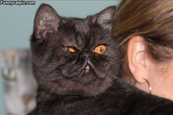 Cat Is Not Impressed