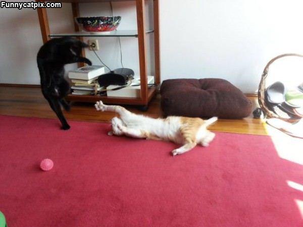 Cat Ninjas Playing