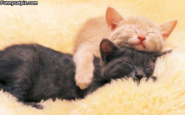 Cat On Cat