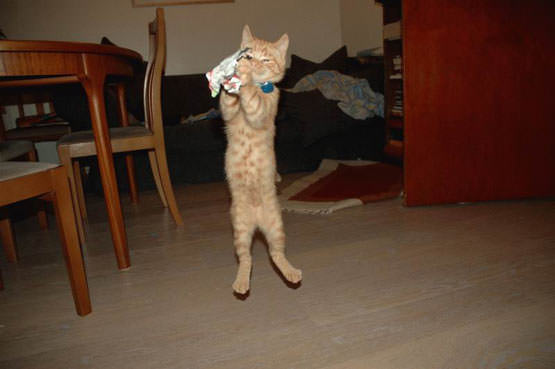 Cat playing catch