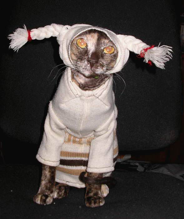 Silly Costume Cat