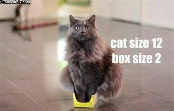 Cat Size 12