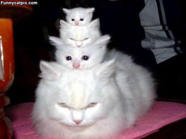 Crazy Cat Lady Cake