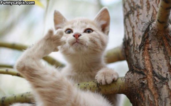 Cat Tree Climber