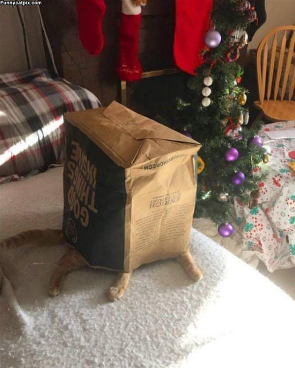 Cat Under The Bag