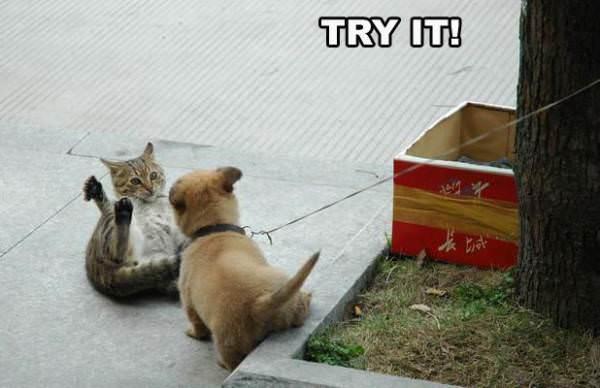 Perros Vs. Gatos Cat_vs_dog_swat