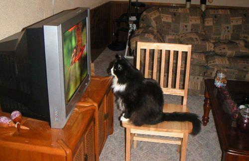 Cat Watching Nature