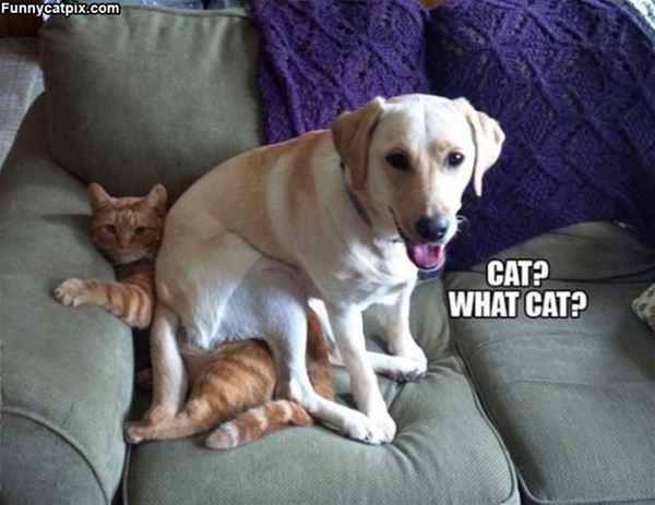 Cat What Cat