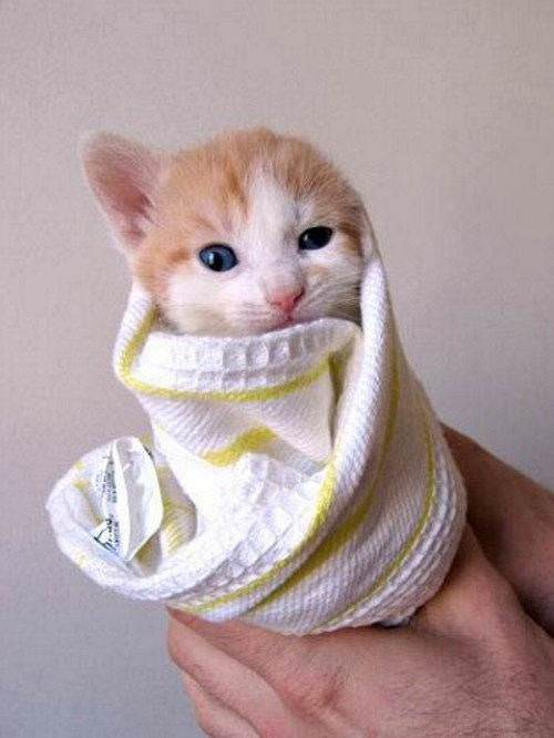 Kitten Wrapped Up Picture