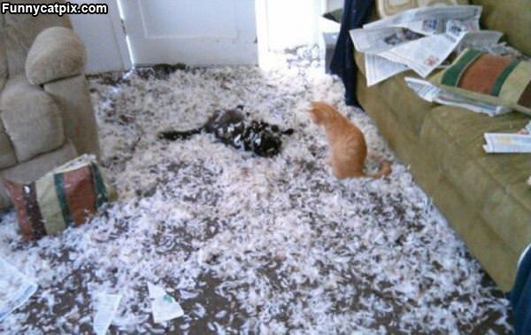 Cats Are Having Fun