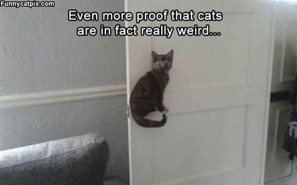 Cats Are In Fact Weird