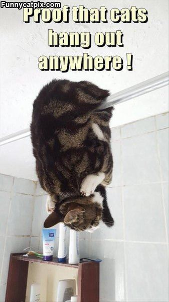 Cats Can Hang Out Anywhere