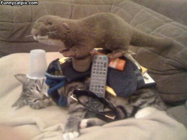 Cats Dont Care
