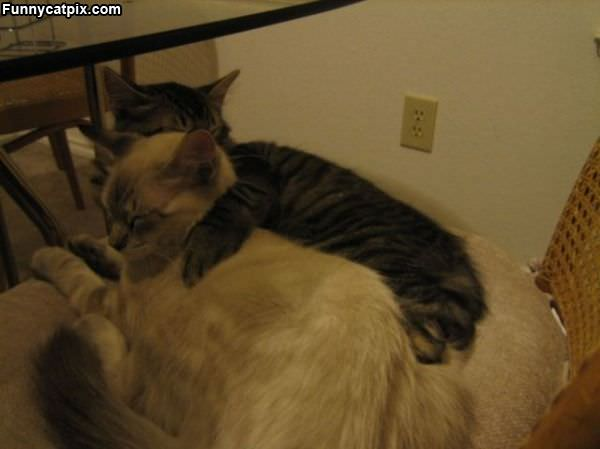 Cats Hug It Out