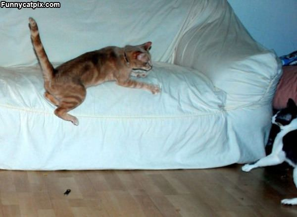 Cats Jump Attack