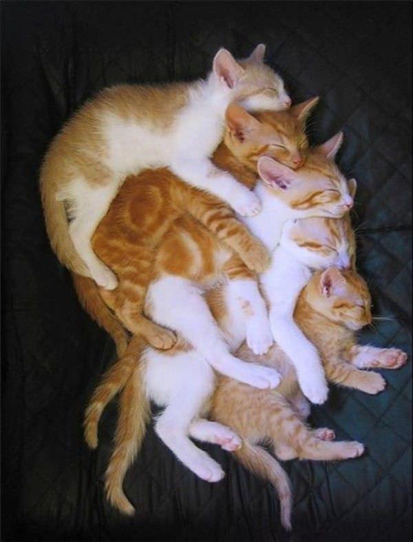 Cats Keeping Warm