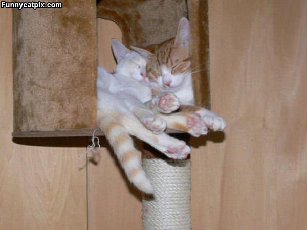 Cats Sharing A Hang Out