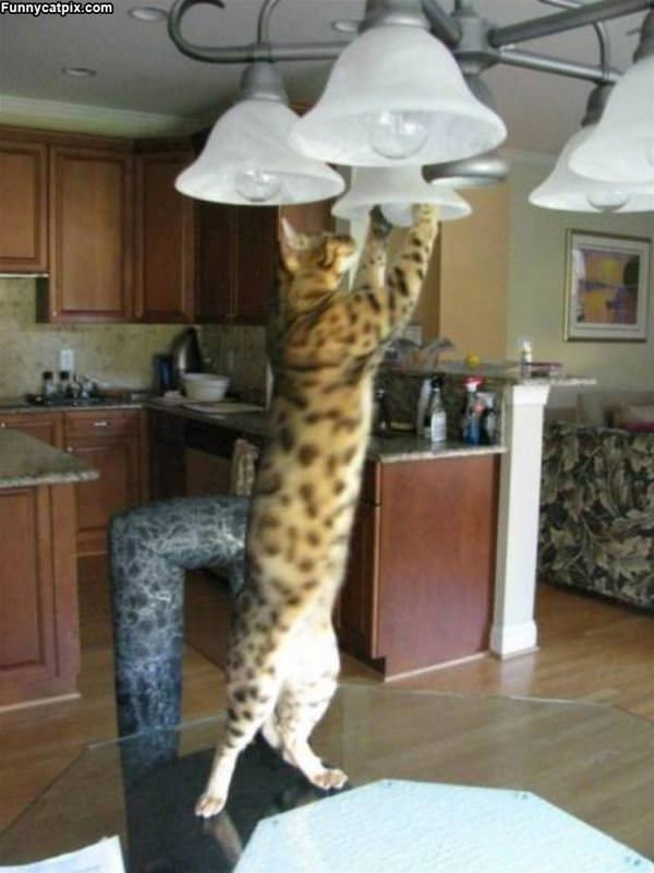 Changing The Bulbs