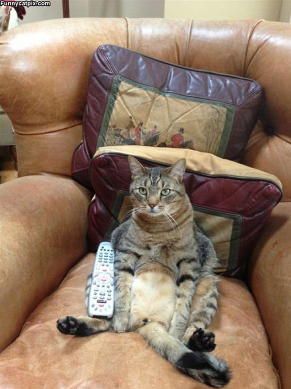 Channel Surfing Cat