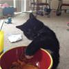 funny cat 1