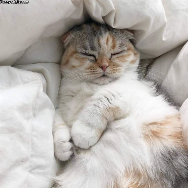 Chill And Sleeping