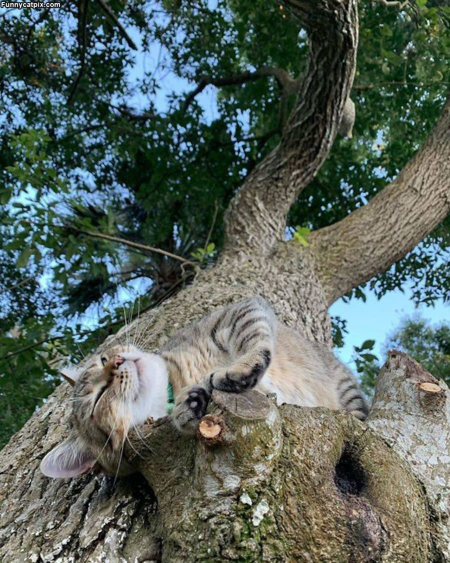 Chill In The Tree