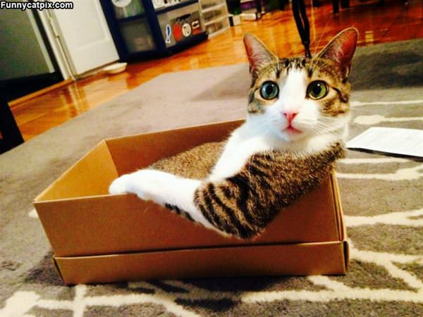 Chilling In My Box