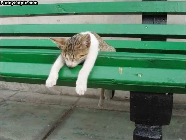 Chilling On The Bench