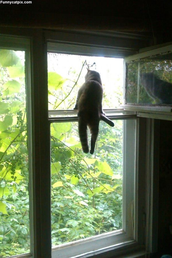 Chilling On The Window