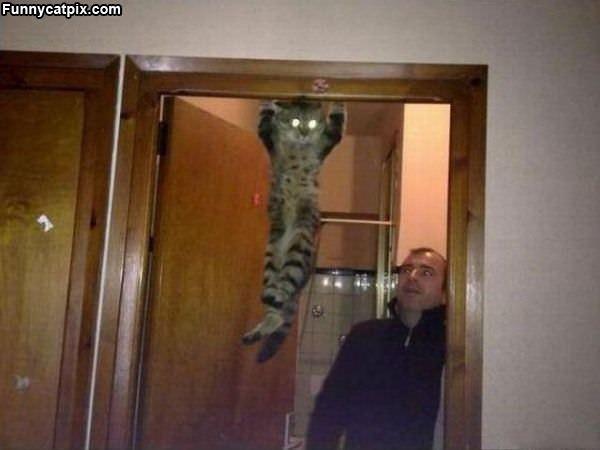 Chin Ups Cat