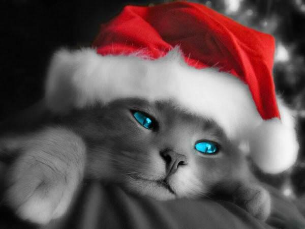 Christmas Cat Hat