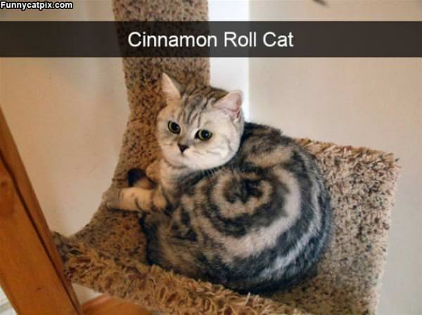 Cinnamon Roll Cat