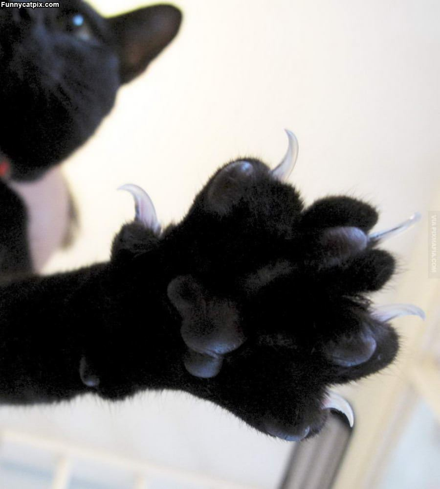Claws Out