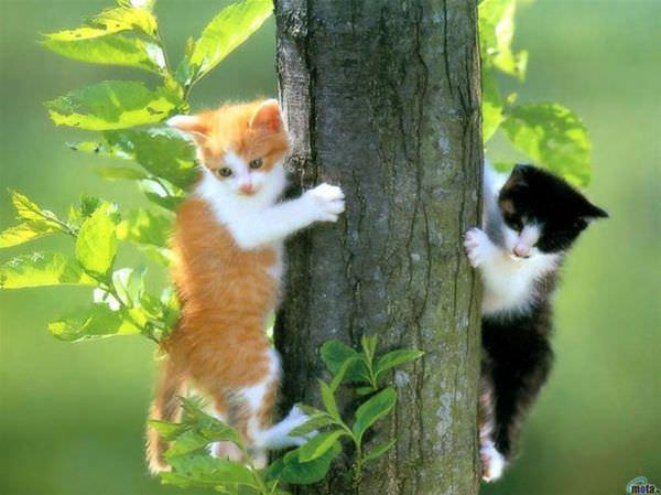 Climbing Cute Kittens