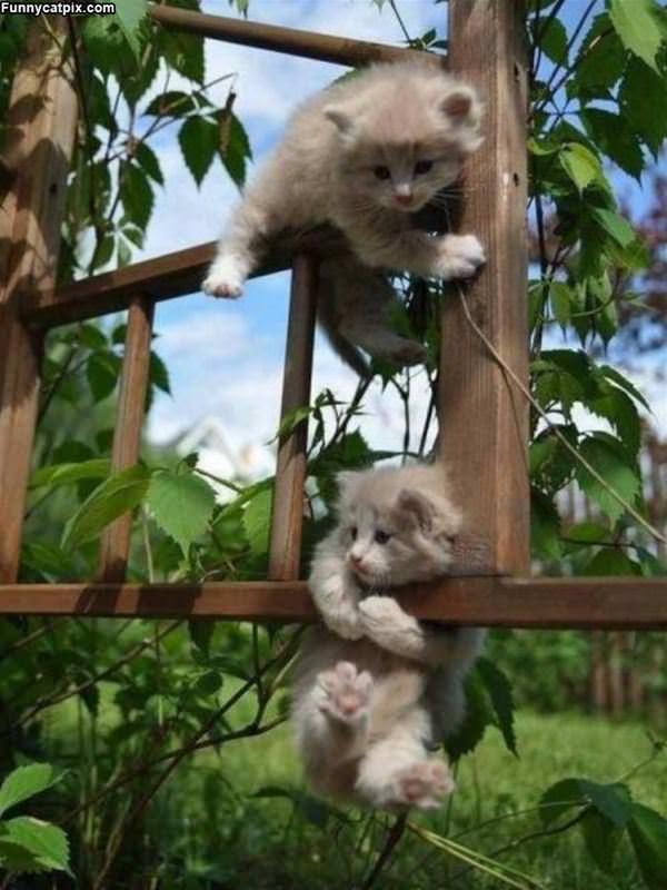 Climbing Up In A Fun Way