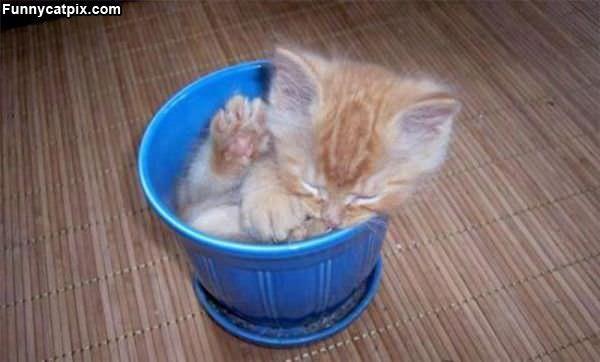 Comfy Bowl