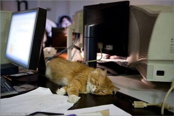 http://www.funnycatpix.com/_pics/Computers_Make_Me_Sleepy.jpg