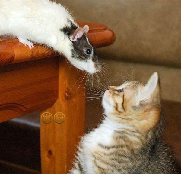 你个猫仔也是宠物? - 雪山 - .
