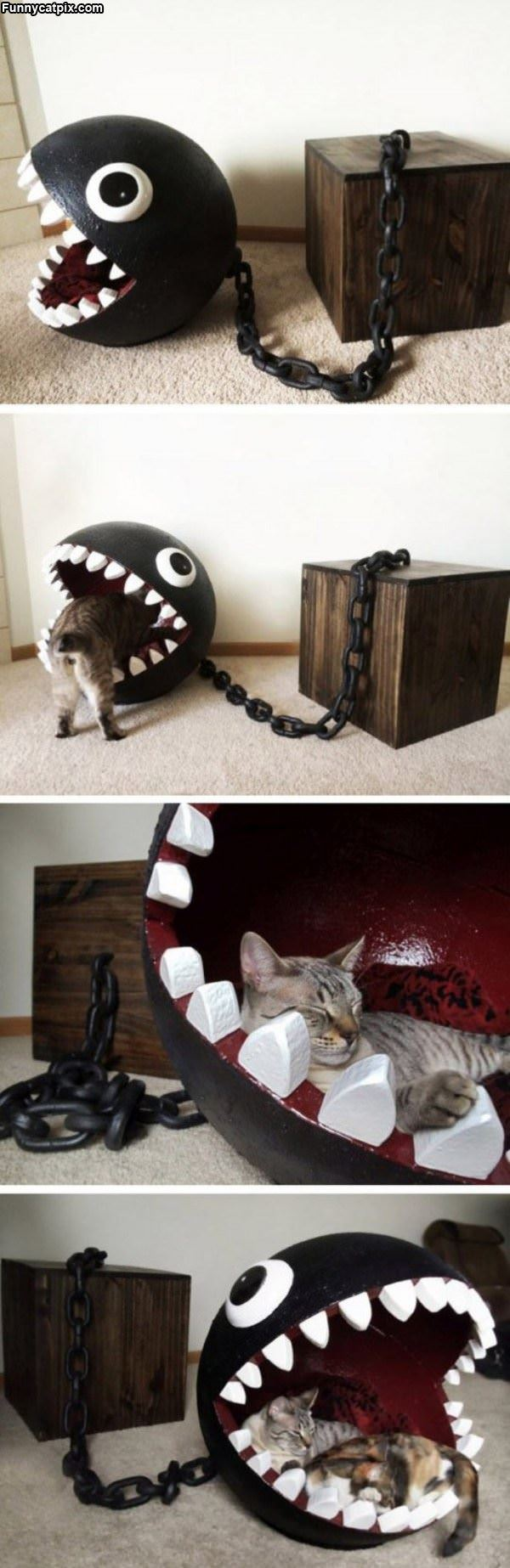 Coolest Cat Bed Ever