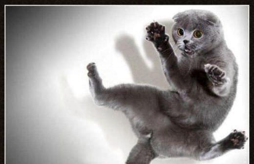 http://www.funnycatpix.com/_pics/Crazy_Jump.jpg