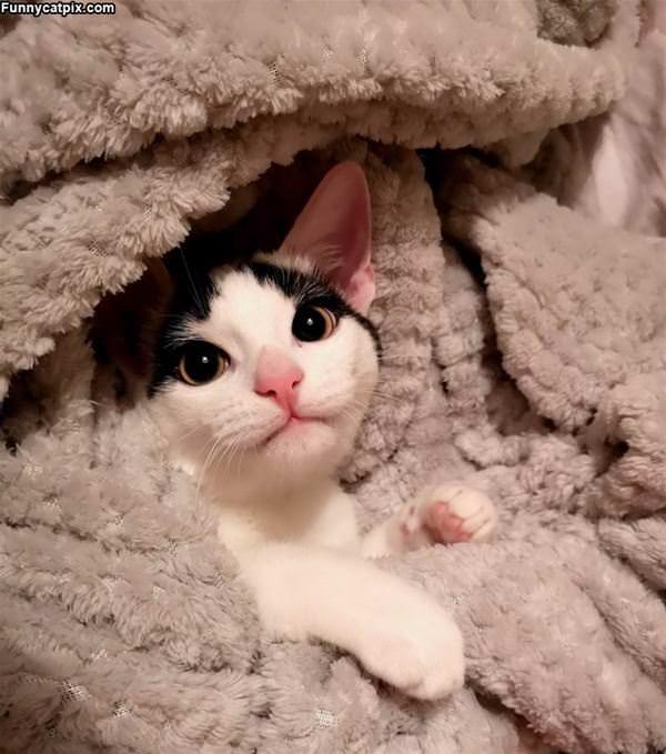 Cuddled In