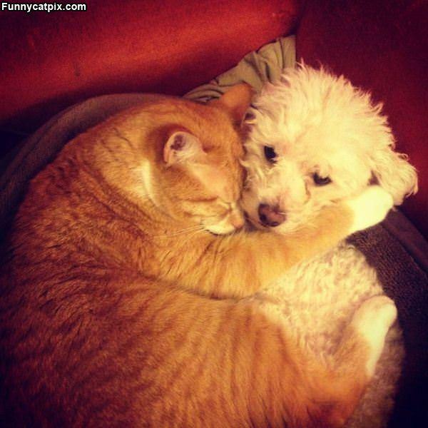 Cuddled Up Together