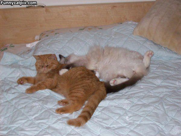 Cuddling Up Together