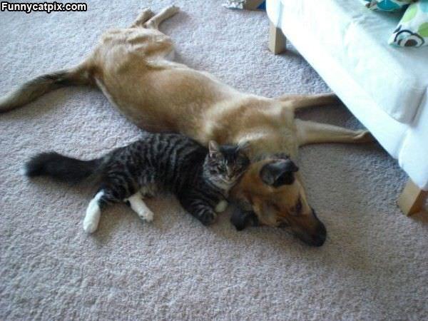 Cuddling With My Buddy