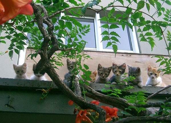 Curious Kittens