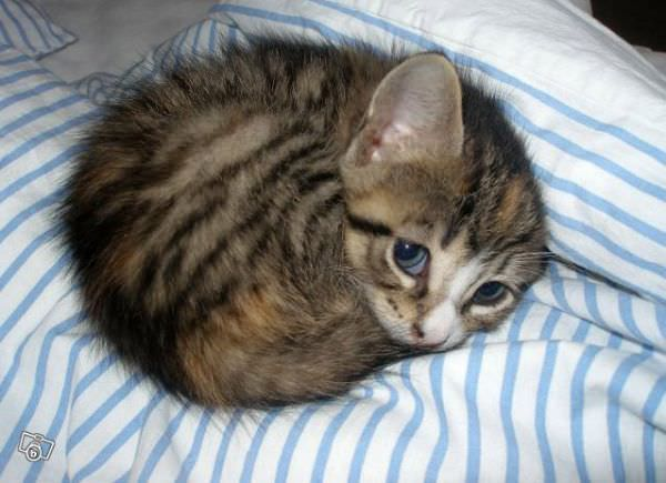 Curled Up