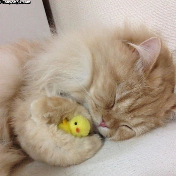 Curled Up Cute