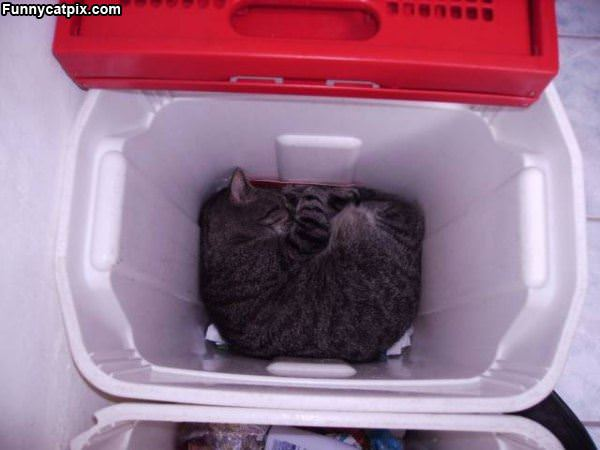 Curled Up In The Box