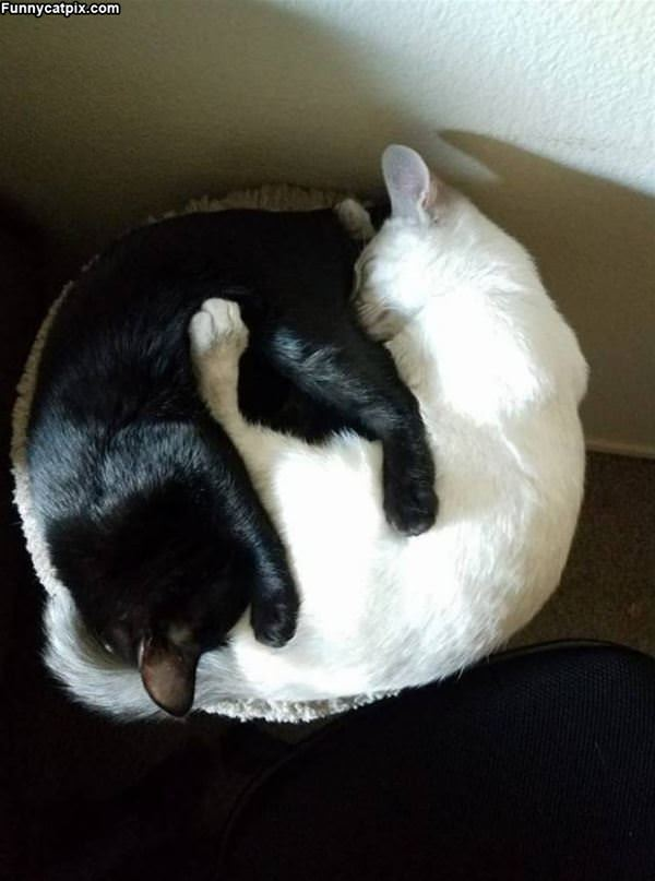 Curled Up Together