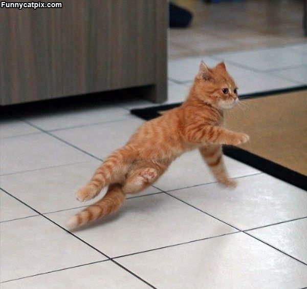 Cute Breakdancing Kitten
